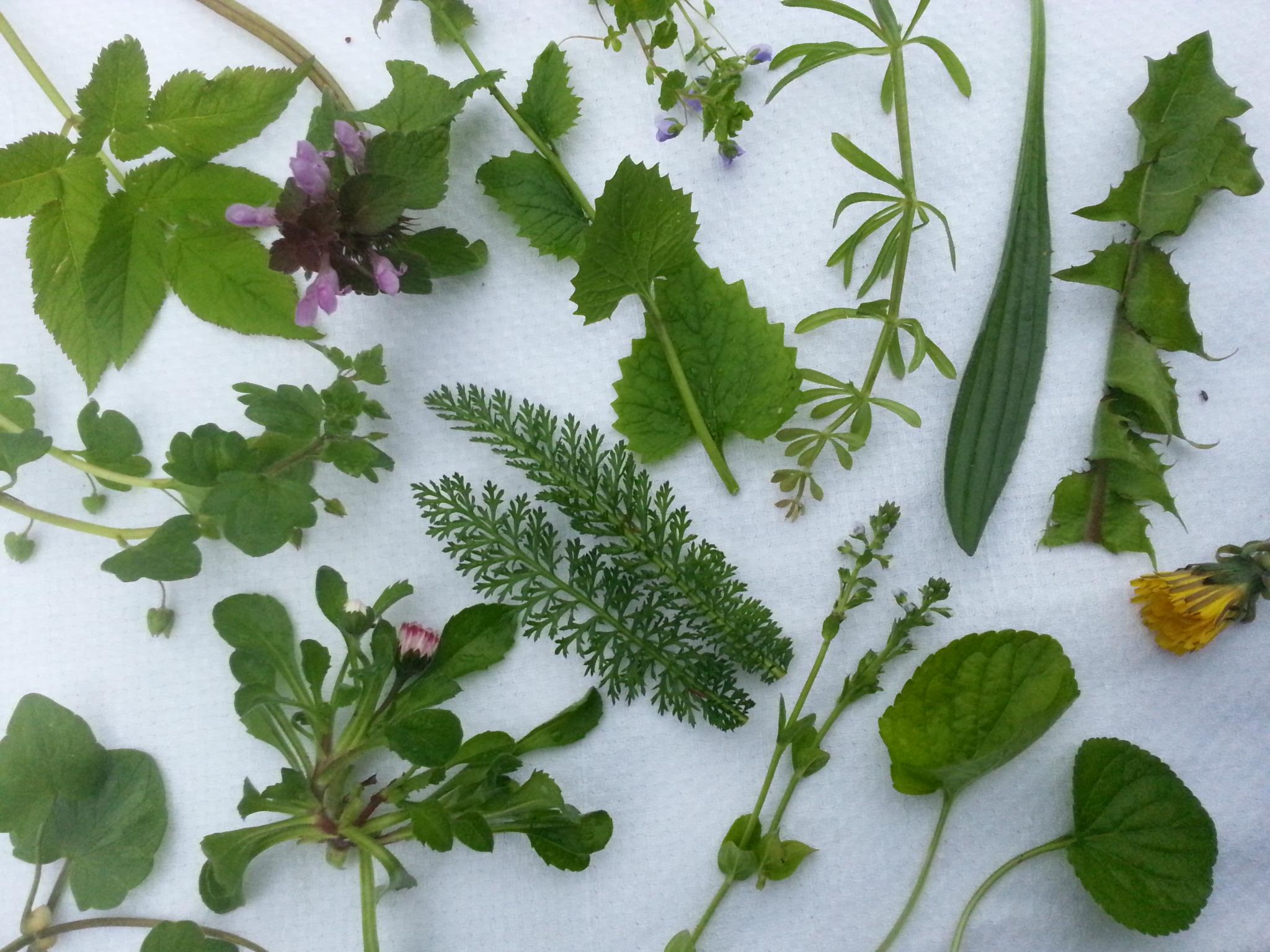 Vilde urter